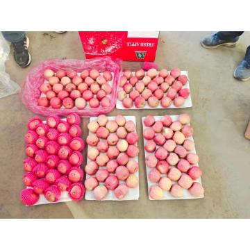 Red Fuji Apples From Gansu