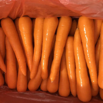 Fresh Delicious Top Quality Carrot