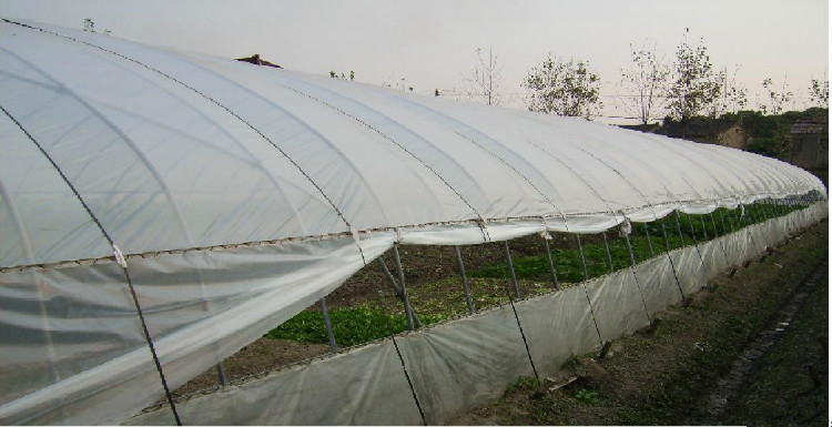 Single Span PE Film Greenhouse