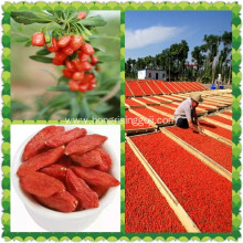 Dried Low pesticide residues Goji Berry