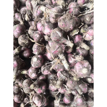 NEW 2020 FRESH GARLIC HENAN CHEAP GARLIC