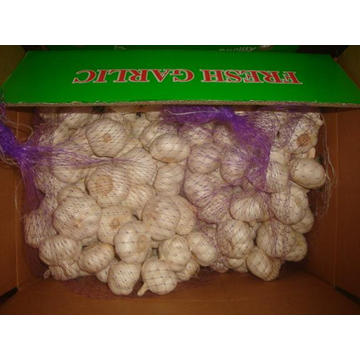 Pure White Garlic Packed 5kg 2bags carton