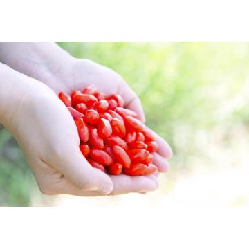 Ningxia New crop Organic /Low residues Goji berry