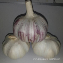 new crop garlic 4.5cm 5.0cm 5.5cm 6.0cm