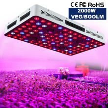 ÉPI LED Cree Stock EU / US Warehouse Grow Light