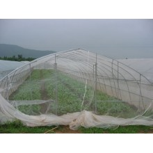 greenhouse plastic insect screen