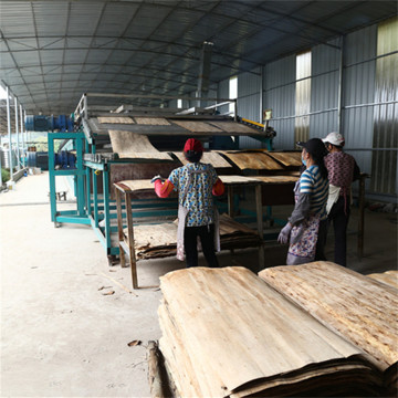 Core Birch Veneer Dryer Equipment