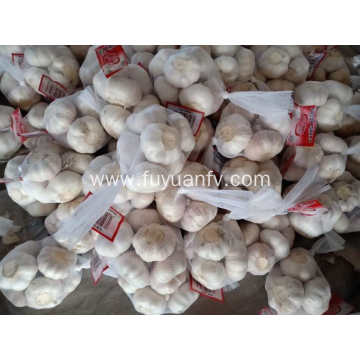 5.5cm normal white garlic