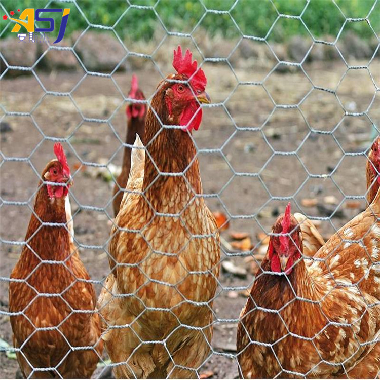 hexagonal wire mesh poultry netting rolls price