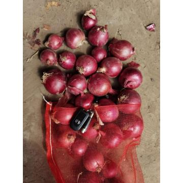 SUPER QUALITY CROP 2020 RED ONION