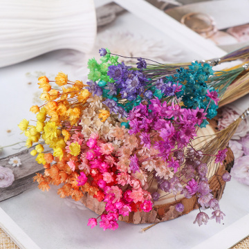 30pcs Decorative Dried Flowers Mini Daisy Small Star Flowers Bouquet Natural Plants preserve Floral for Wedding Home Decoration