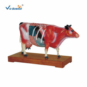 Animal Anatomy Cattle Acupuncture Model