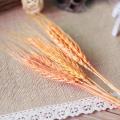 100pcs orange color