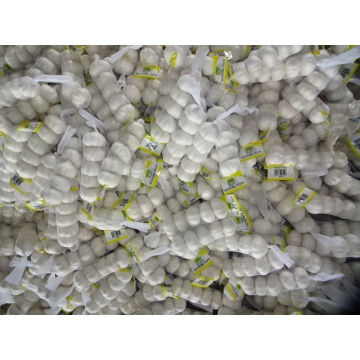 2020 Season Wholesale Pure White Garlic
