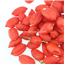 Freeze Goji Berry Wolfberry