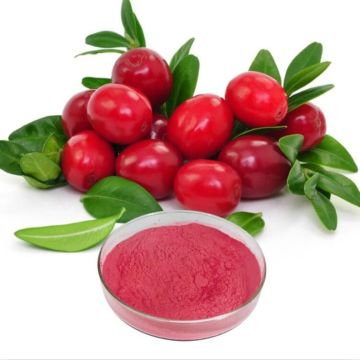 Best lingonberry powder benefits