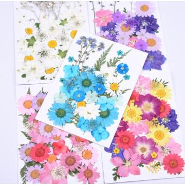 Natural Pressed Dried Flowers Branches DIY Scrapbooking Arts Crafts Phone Case Album Card Decoration