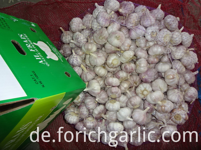 Good Quality Garlic Fresh