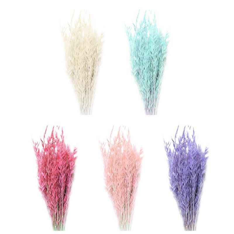 50pcs natural plant colored oat dried flower hay