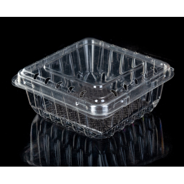 PET Plastic Blueberry Fruit Clamshell Tray