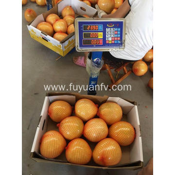 From 2018 new crop fresh pomelo