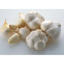Best Quality Garlics for Sale