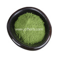 Water Soluble Fresh Dehydrated Spinach Powder