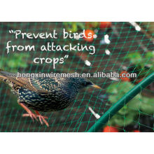 Sturdy green anti-bird net