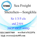 Shenzhen Port Sea Freight Shipping To Songkhla