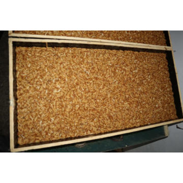 Aquarium Fish Tank Feed