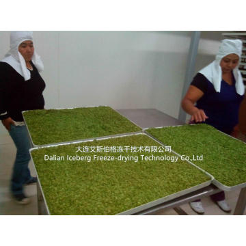 Parsley Freeze Drying Machine