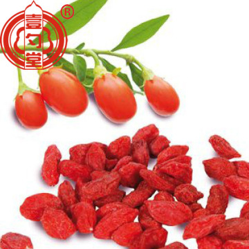 Medicinal healthy conventional dried goji berry fruit