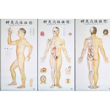 Bilingual Acupuncture Point Wall Charts A Set (Front Side Back) Real Person Chinese and English for Self Care