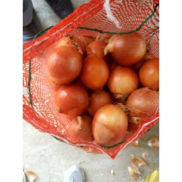 SUPER QUALITY CROP 2020 YELLOW ONION