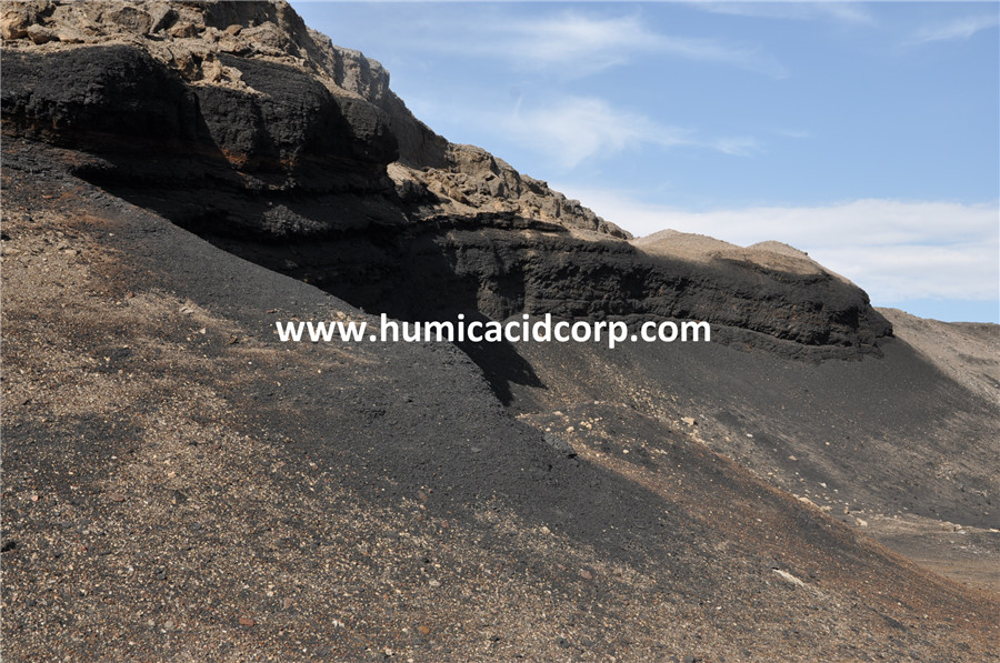 Leonardite Humic Acid in Xinjiang
