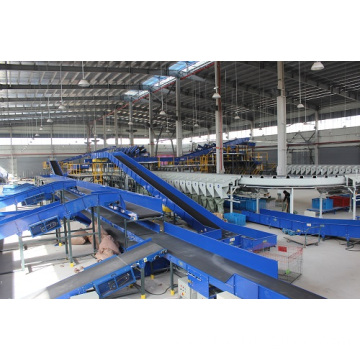 Ring Cross Belt Sorting Machine