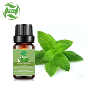 High quality Mentha Piperita essential oil Peppermint oil