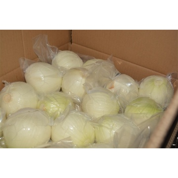 Fresh Peeled onion 2018 new crop
