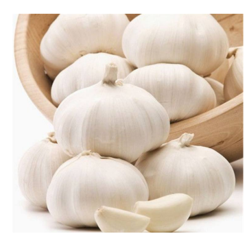 2020 New Crop Coldroom White Garlic