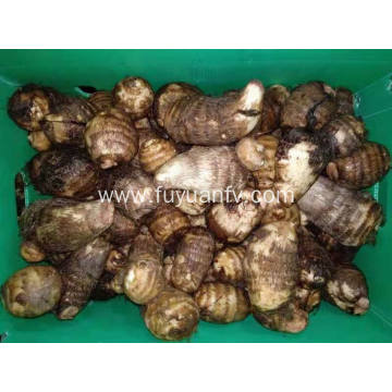 new crop fresh taro