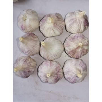 pure white garlic in 5.6kg carton