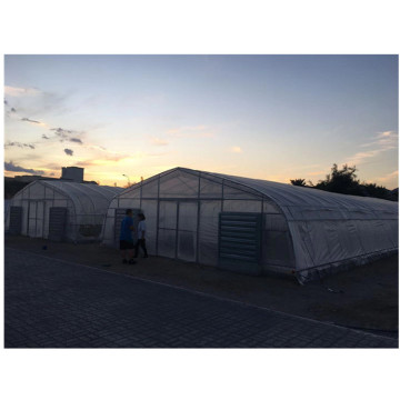 Poly Tunnel Green House Vegetable Tunnel Greenhouse For Tomato