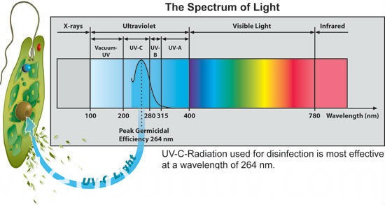 Ultraviolet air purifier lamp