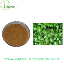 Chinese Ivy Extract Powder 4:1 10:1