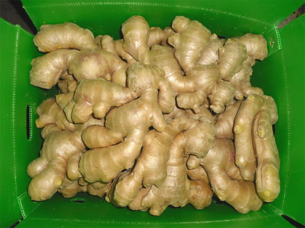air dried ginger 1