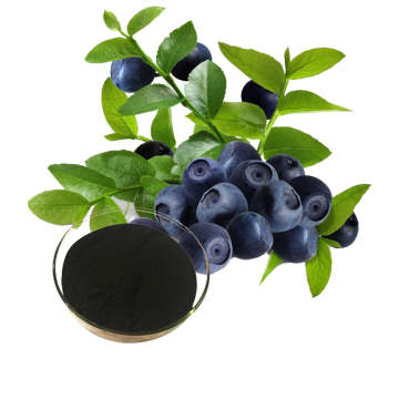 Bilberry Extract  25% anthocyanidins