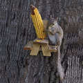 Funny Gag Gift Novelty Squirrel Feeder, GIBBON/ ET-720729, Easy to Clean & Fill & Install Wooden Squirrel Feeder