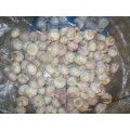 Hot Sale New Crop Knoblauch 2019
