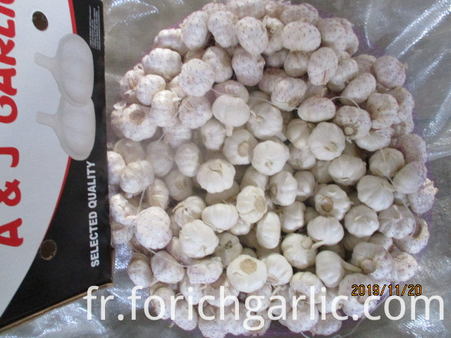 Best Quality Pure White Garlic