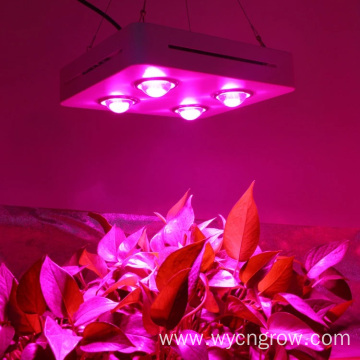 Grow light cob for hydroponic